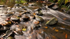 Stock Video Footage of Fresh natural spring water cascading over stones autumn colors