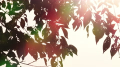 Swaying branches with sun in background: back light, summer Stock Footage