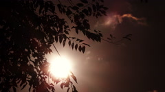 Sun behind the branches of a tree: dramatic scenario Stock Footage