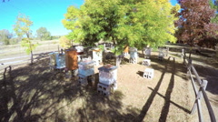 Beehives under on the farm in Autumn. Stock Footage
