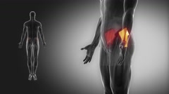 Gluteus medius - muscle view with muscle map Stock Footage