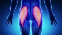 Gluteus maximus - blue muscle in detail zoom in Stock Footage