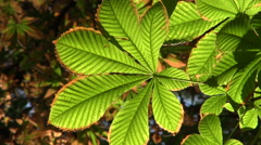 Vibrant green and brown leaf Stock Footage