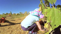 Toddler picking her pumpkin at the pumpkin patch. Stock Footage