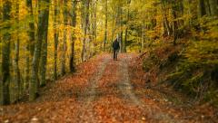 Autumn walk in colorful woods - stock footage