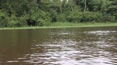 Pink River Dolphin swimming 2 Stock Footage