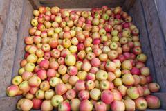 Bulk Apples Stock Photos