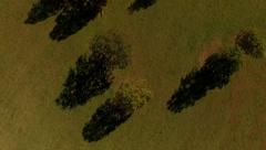 4K aerial view of green field and trees texture - stock footage