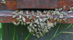Bees near the entrance to beehive Stock Footage