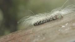 Hairy Worm under Rainy Sky - stock footage