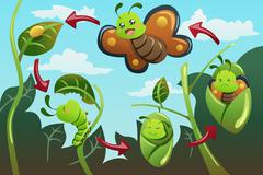 Life cycle of the butterfly Stock Illustration