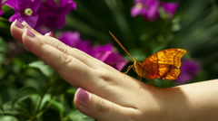 Butterfly On The Human Hand. - stock footage