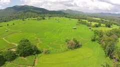 Aerial shot rice field and mountain view - stock footage