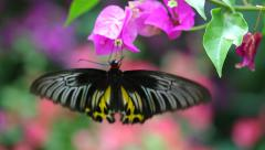 Big beautiful butterfly. Stock Footage