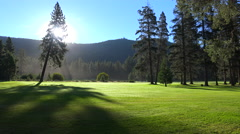Morning fog shrouds a beautiful pine tree at sunrise. - stock footage