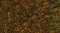 4K aerial view – colorful autumn tree tops – fall landscape - stock footage