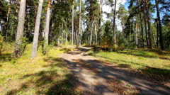 Earth road in autumn forest Stock Footage