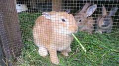 Rabbit eating green Stock Footage