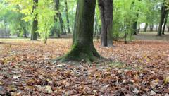 Fallen leaves from trees Stock Footage