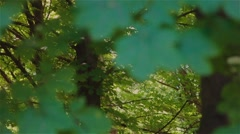 Morning sun in the forest - stock footage