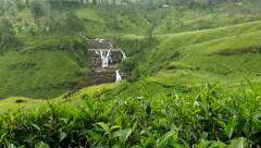 Tea Bushes and Garden with Waterfall background Stock Footage