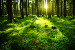 Summer forest with sun and shadow Stock Photos