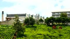 Pedro Tea Factory Nuwara Eliya Sri Lanka Stock Footage
