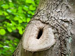 Tree trunk with knot and black hole - stock photo