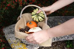 Woman adds a harlequin pumpkin to a basket of gourds Stock Photos