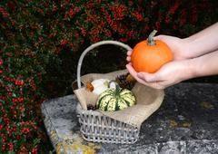 Woman holds pumpkin in two hands above basket of gourds Stock Photos