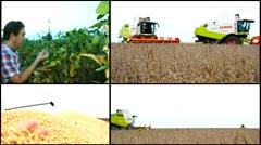 Soya field ,harvest farmer in field ,collage - stock footage