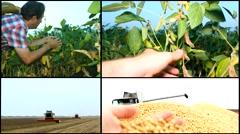 Soya field ,harvest farmer in field multiscreen - stock footage