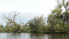 Great black cormorant on tree at Havel River Stock Footage