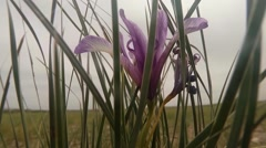 Stock Video Footage of Mongolian desert insects close up among the blades of grass and stones