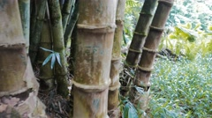 Bamboo close up Stock Footage