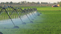 An industrial sprinkler system waters California farmland during a drought. Stock Footage