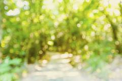 Blurred forest pathway background Stock Photos