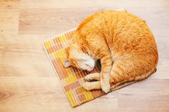 Peaceful Orange Red Tabby Cat Male Kitten Sleeping In His Bed On - stock photo