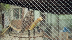 Owl In A Cage Stock Footage