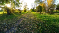 Flying at low altitude. Autumn park. Aerial footage. Stock Footage