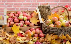Red apples with autumn leaves on background rustic brick - stock photo