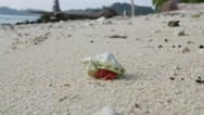 Stock Video Footage of Hermit crab timelapse