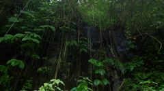 Dripping wet jungle Stock Footage