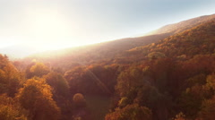 Flying Above Autumn Forest Aerial View Stock Footage