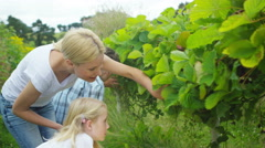 4K Happy family picking fruit together at farm - stock footage