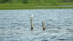 Seagull Sit on Wooden Pole At Sea Stock Footage