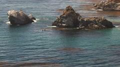 Whales big sur coastline Stock Footage