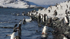 Beach with Penguins Stock Footage