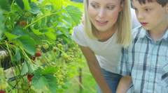 4K Happy mother & son picking & eating fruit in berry orchard - stock footage