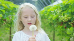 4K Little girl in berry orchard blowing on a dandelion - stock footage